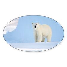 Polar bear - Decal