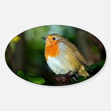 Robin - Decal
