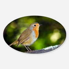 Robin - Decal