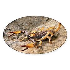 Scorpion - Decal