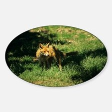 Red fox - Sticker (Oval)