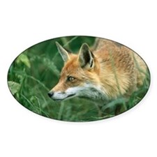 Red fox hunting - Decal