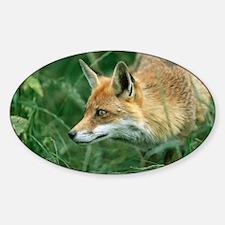 Red fox hunting - Sticker (Oval)