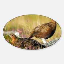 Red grouse - Sticker (Oval)