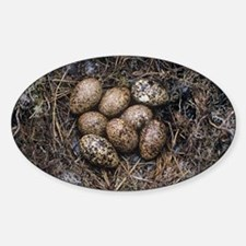 Red grouse eggs in a nest - Sticker (Oval)