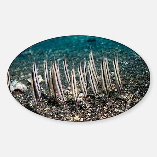 Shrimpfish - Sticker (Oval)