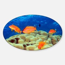Sea goldie fish over coral - Decal