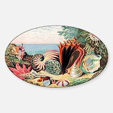 Sea shells - Decal