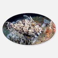 Strapweed filefish - Sticker (Oval)
