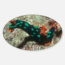 Sea slug - Decal