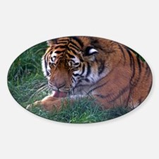 Tiger grooming - Sticker (Oval)