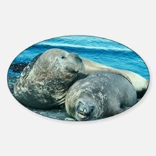 Southern elephant seals - Sticker (Oval)
