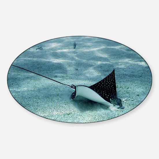 Spotted eagle ray - Sticker (Oval)