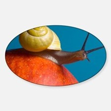 Snail - Sticker (Oval)