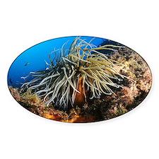 Snakelocks anemone - Decal