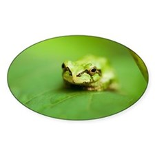 Tree frog - Decal