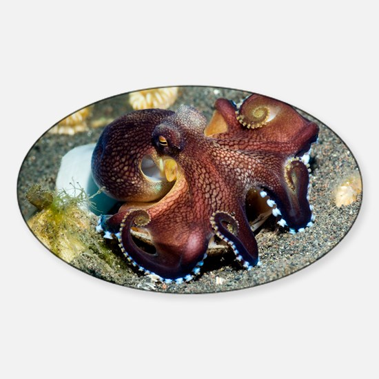 Veined octopus feeding - Sticker (Oval)