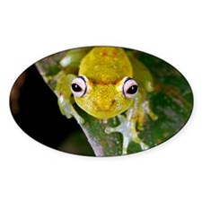 Tropical frog - Decal