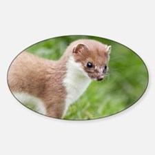 Stoat - Decal