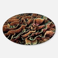 Turbinaria coral - Decal