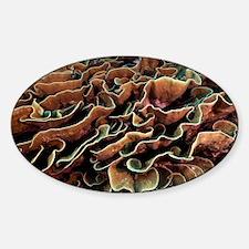 Turbinaria coral - Sticker (Oval)