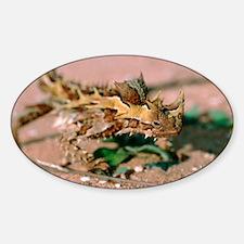 Thorny devil lizard - Sticker (Oval)