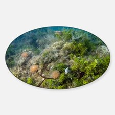 Upside-down jellyfish - Decal