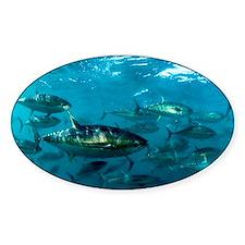 Yellowfin tuna - Decal