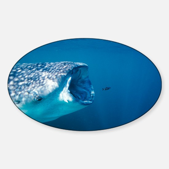 Whale shark and pilot fish - Sticker (Oval)