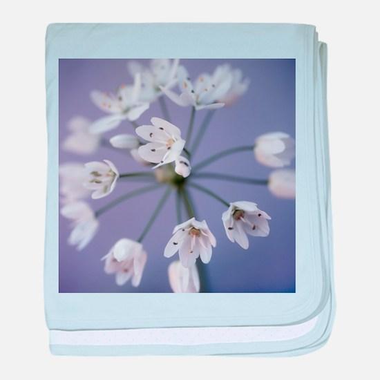 Allium flower head (Allium sp.) - Baby Blanket