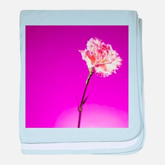 Carnation (Dianthus caryophyllus) - Baby Blanket