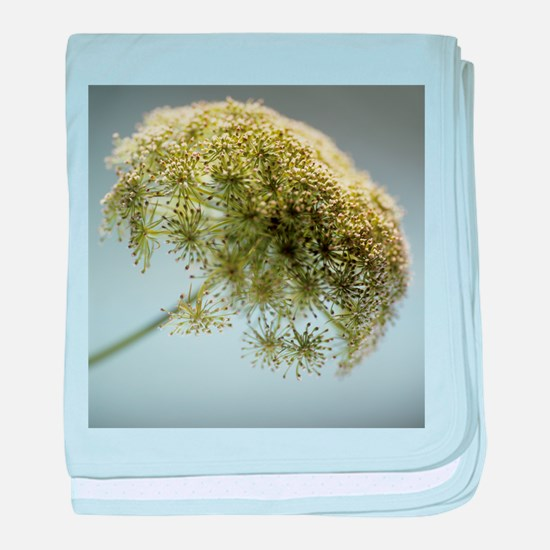 Dill (Anethum graveolens) - Baby Blanket