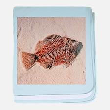 Fossilised fish, Priscacara serata - Baby Blanket