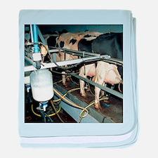 Milking dairy cows - Baby Blanket