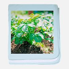 Potato plant - Baby Blanket