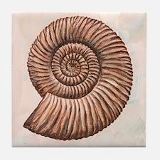 Perisphinctes ammonite, artwork - Tile Coaster