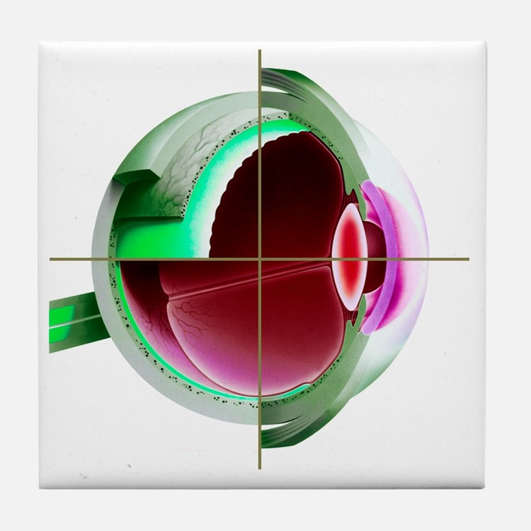 Human eye - Tile Coaster