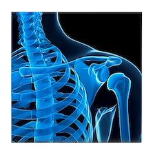 Shoulder bones, artwork - Tile Coaster