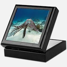 Broadclub cuttlefish - Keepsake Box