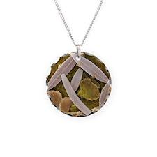Diatoms, SEM - Necklace