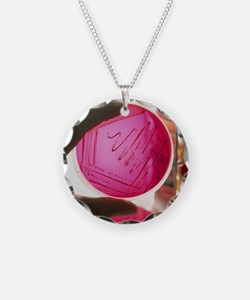 sh of cultured bacteria - Necklace