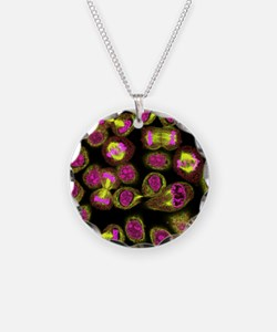Mitosis, light micrograph - Necklace
