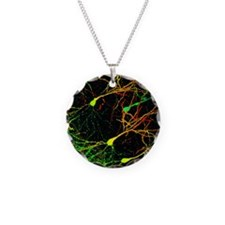 micrograph - Necklace