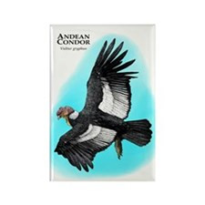 Andean Condor Rectangle Magnet