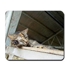 Sleepy cat mousepad