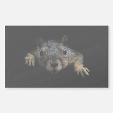 Squirrel Decal