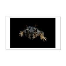 Squirrel Car Magnet 20 x 12
