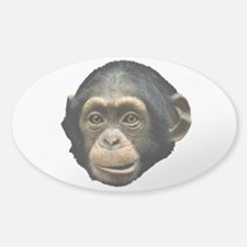 Chimp Face Decal