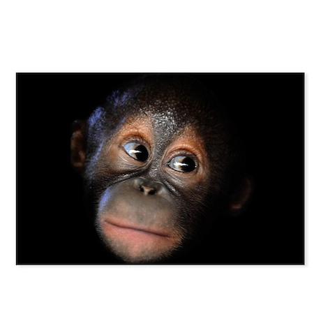 Baby Orangutan Face Postcards (Package of 8)