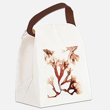 Irish moss seaweed - Canvas Lunch Bag